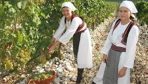 \'\'Dani berbe grožđa Brotnjo 2013\'\' donose niz kulturnih, gospodarskih i turističkih manifestacija